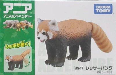 【阿LIN】48801A 11-浣熊 TAKARA TOMY 多美動物園 ST安全玩具 教學