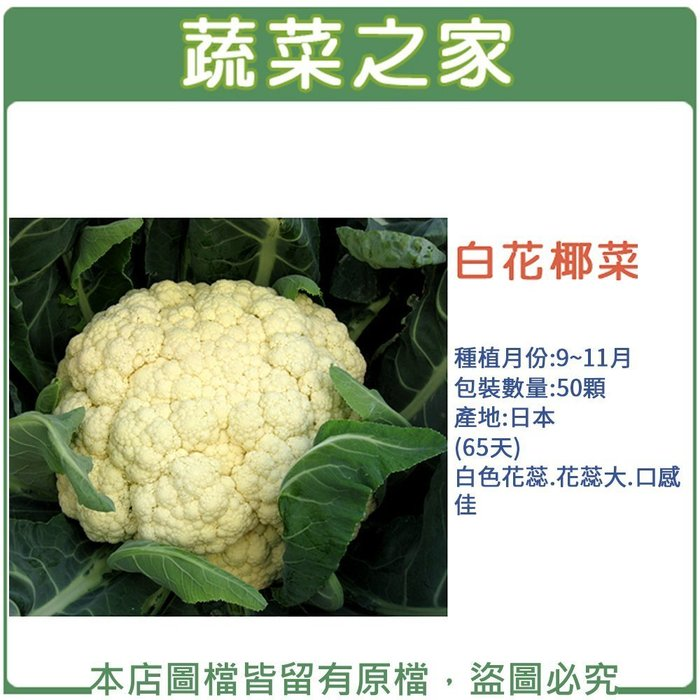【蔬菜之家】B03.白花椰菜 種子20顆(白色花蕊.花蕊大.口感佳.蔬菜種子)