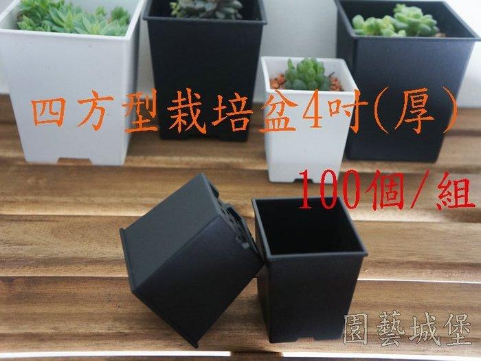 【園藝城堡】四方型栽培盆4吋-黑色(厚)100個/組 多肉植物 仙人掌 方盆 花盆 育苗盆