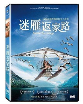 [DVD] - 迷雁返家路 Spread Your Wings ( 飛行正版 ) - 預計 7/24 發行