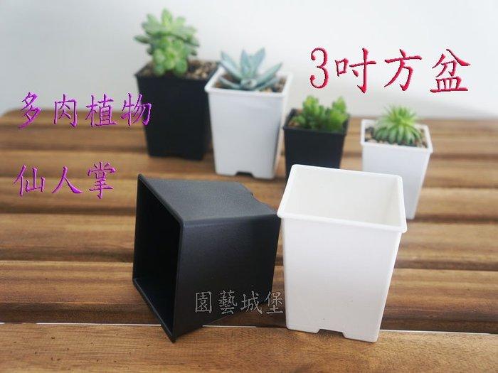【園藝城堡】3寸方型栽培盆(厚) 《白色下標區》多肉植物 仙人掌 方盆 花盆 育苗盆 植栽盆 塑膠盆