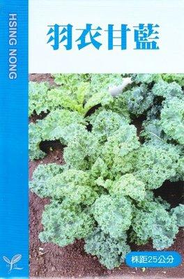 羽衣甘藍【滿790免運費】羽衣甘藍(無頭甘藍) 【蔬果類種子】興農牌中包裝 每包約1公克