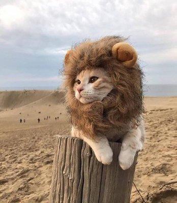 現貨 扮萌神器 貓狗獅子頭套 假髮帽子...