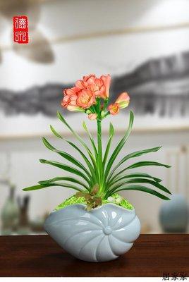 花盆 花器 陶瓷擺飾 青瓷個性簡約陶瓷花盆專用室內桌面蝴蝶蘭茉莉花梔子花君子蘭北歐