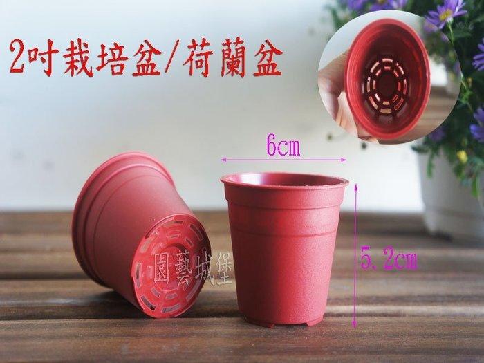 【園藝城堡】2吋栽培盆 荷蘭盆 紅色圓型盆 紅盆  草花用盆  花盆