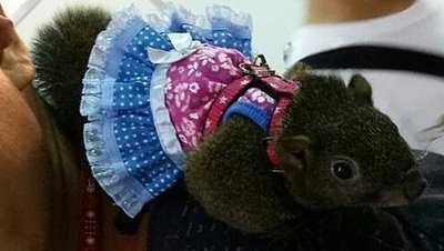 ☆汪喵小舖2店☆ 寵物鼠用衣服、洋裝 S // 多種造型任選 // 適合松鼠