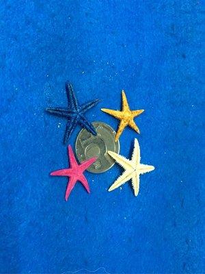 【鑫寶貝】貝殼DIY 海星標本 染色 槭海星標本(3-3.5公分,桃紅色)  果凍蠟DIY  4隻20元