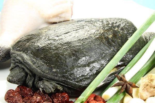 【滋補養生系列 】活凍甲魚~教您燉霸王別姬湯~甲魚俗名鱉自古就是皇族及老饕的盤中名飧之一