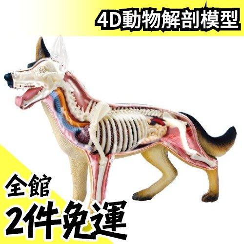 【NO.18 狗】日版 青島文化教材社 AOSHIMA 4D立體拼圖 解剖模型 動物解剖【水貨碼頭】