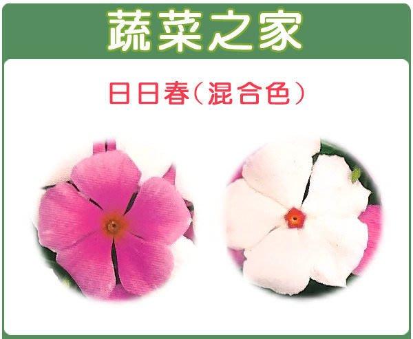 【蔬菜之家】H39.日日春種子20顆(混合色,高45~60cm.花卉種子)