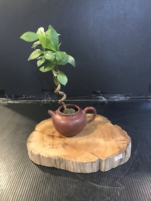 【 檜人檜語 】重油黃檜聞香 花枱 茶具原木座e