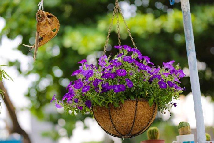 花卉吊籃組10吋