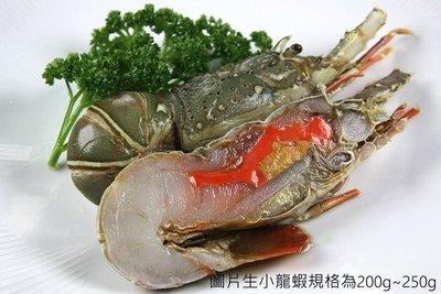 【萬象極品 】生小龍蝦(切半)/約160g±10g/尾~教您做五星級蒜蓉清蒸小龍蝦