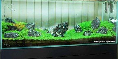 ◎ 水族之森 ◎ YiDing 超白玻璃缸 & Aqua Forest Aquarium 日式烤漆底櫃120 P 缸櫃組
