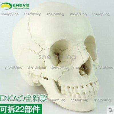 [MEDI-A_00805] 醫學用人體頭骨模型頭顱骨拼裝可拆美容微整形教學頭骨