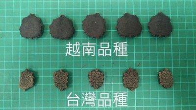 [森之寶] - 木鱉果 木虌子 木鱉子 台灣/越南 種子