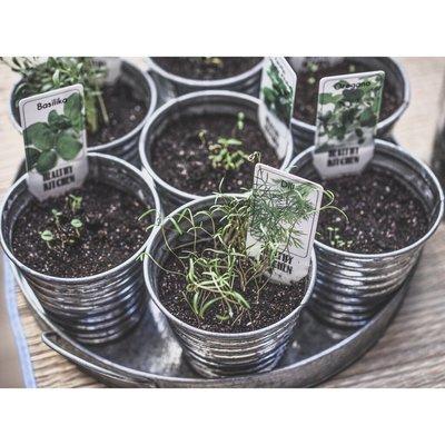 **貝蘿香草花園**精選種子 香草類 總匯 高發芽率