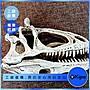 KIPO- 恐龍頭骨模型 化石模型 玩具模型- JNN0...