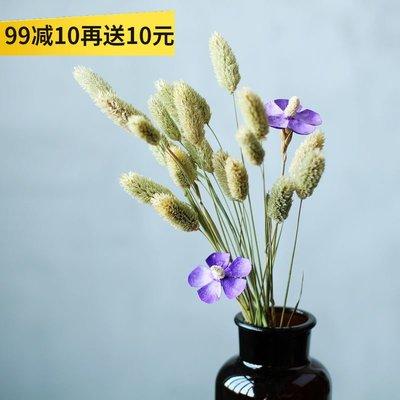 千禧禧居~天然寶石草自然風干美人草家居裝飾藝術干花插花真花干草拍攝道具