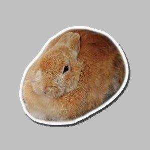 【SPSP】奶油兔 兔子 兔 寵物 3M貼紙 防水貼紙 疤痕貼紙 機車貼紙 汽車貼紙 旅行箱貼紙 動物貼紙 車身貼紙