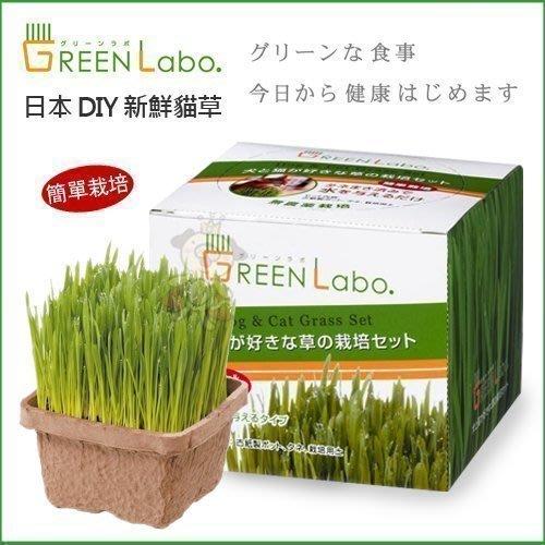 日本GreenLabo燕麥盆栽組DIY新鮮貓草盆栽燕麥種子貓草組合包懶人包易種包