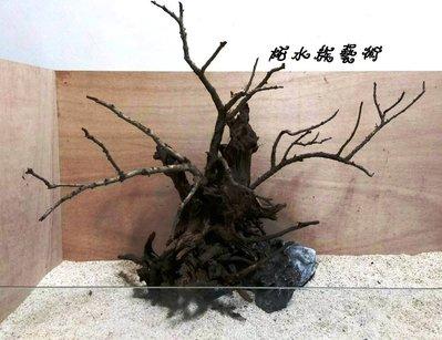 -柘造景藝術- 青龍石 窈窕木 海芙蓉 雲山石