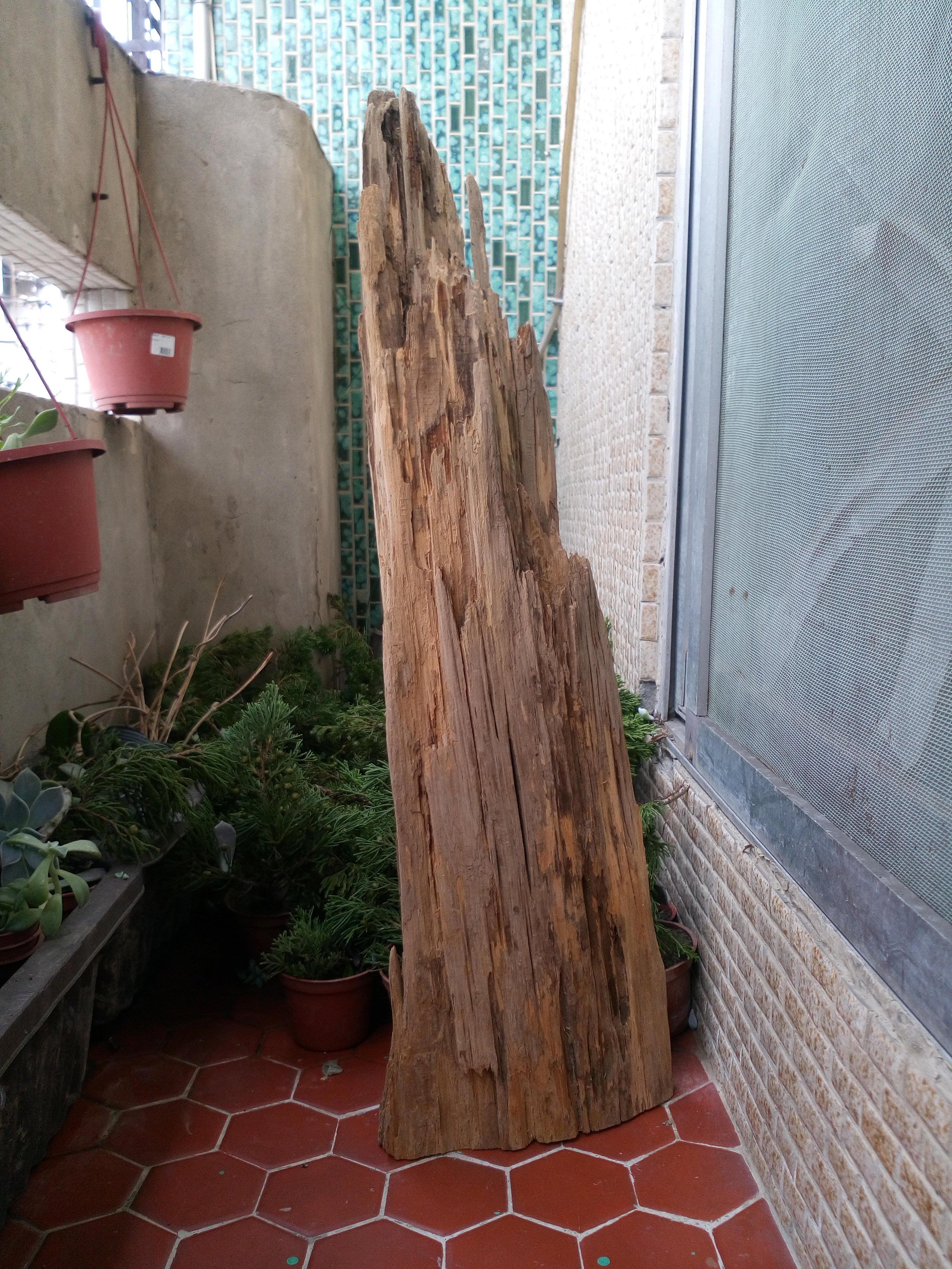 【田源由】檜木 天然風化 山型 282