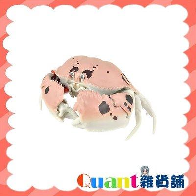 ∮Quant雜貨鋪∮┌日本扭蛋┐  BANDAI 螃蟹環保扭蛋 單售 04 逍遙饅頭蟹 可動 生物圖鑑 甲殼類第一彈