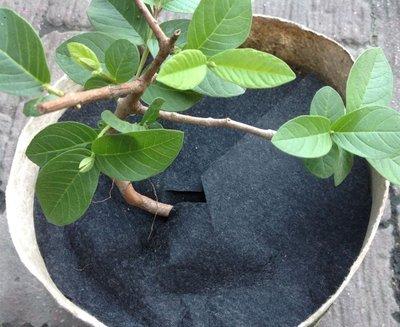 (不織布)抑草蓋 黑色  1.0尺 1尺 3元 防草布、抑草墊、除草、抑制 雜草、抑草蓆 抑草布 防草蓋