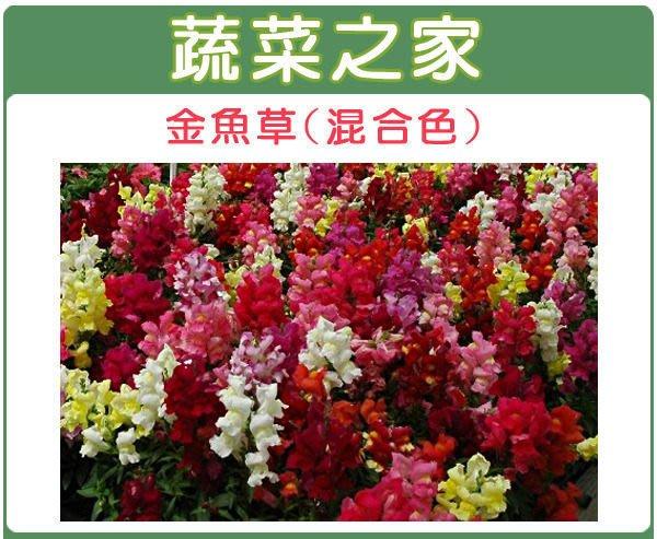 【蔬菜之家】H14.金魚草種子0.06克(約300顆)(混合色,高15cm.花卉種子)