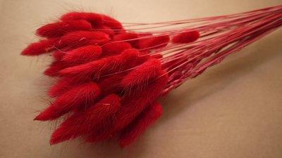 《Roof Garden Workshop》【乾燥花材】紅色兔尾草/特殊色/拍照/佈置/婚禮/花圈/花束/一束10入