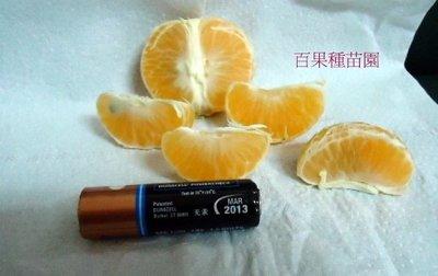 百果種苗園※黃金砂糖橘※無子砂糖橘※自產自銷歡迎批發訂購