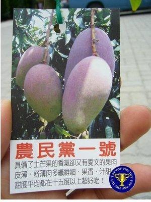 ╭*田尾玫瑰園*╯ 水果苗-(農民黨一號.福爾摩沙總統一號芒果)