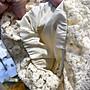 韓國♥️水溶繡花蕾絲短袖上衣🌾sa503