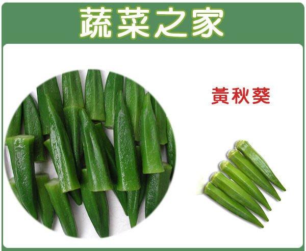 【蔬菜之家】G10.黃秋葵種子50顆(翠香,F1.別名羊角豆,結果綠色、營養價值高.蔬菜種子)