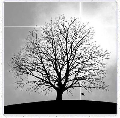 餐巾紙33-3713(樹)餐巾紙~蝶古巴特 餐巾紙拼貼 彩繪 黏土DIY手作材料