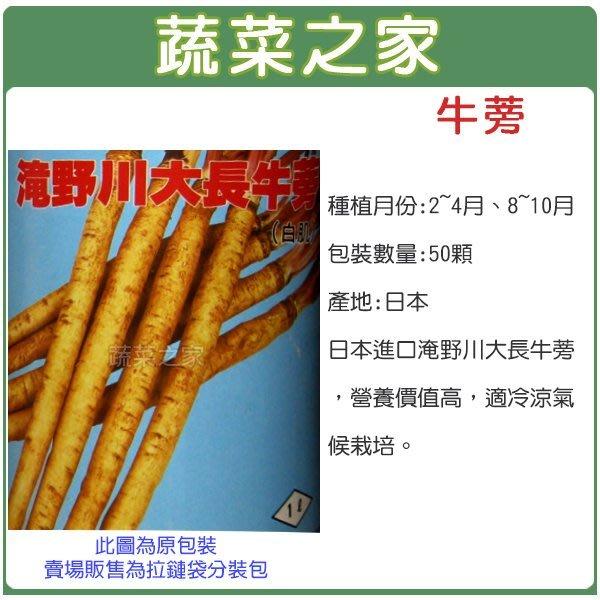 【蔬菜之家】C10.牛蒡種子50顆(日本進口淹野川大長牛蒡,營養價值高,適冷涼氣候栽培。蔬菜種子)