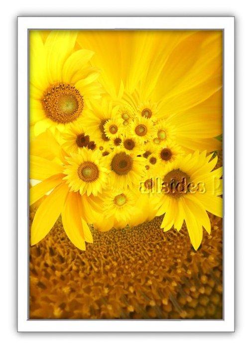 四方名畫: 太陽花向日葵070 C尺寸  含實木框/厚無框畫 畫質細緻 裝飾畫MIT可訂製尺寸