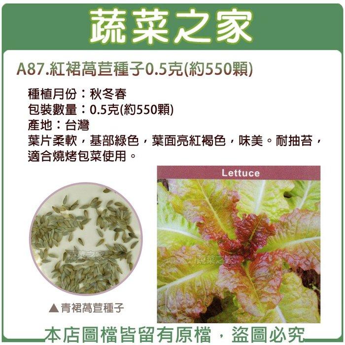【蔬菜之家】A87.紅裙萵苣種子0.5克(約550顆)(葉片柔軟,基部綠色,葉面亮紅褐色,味美。耐抽苔,適合燒烤包菜)