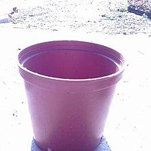 肥料-花肥-農藥-園藝資材-花盆- ** 荷蘭盆  栽培盆(紅) ** 8吋盆 /【花花世界玫瑰園】kk