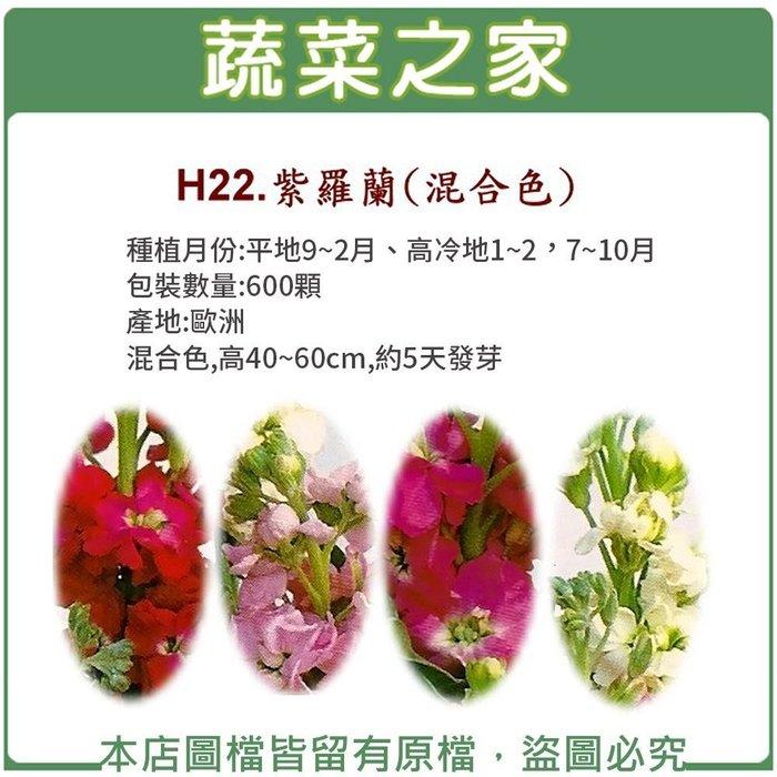 【蔬菜之家】H22.紫羅蘭種子0.16克(約70顆)(混合色,高40~60cm.花卉種子)