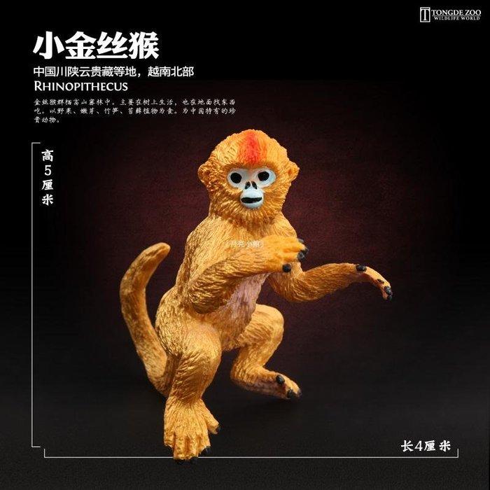 「月亮小館」 童德仿真猴模型兒童寶寶靈長類野生動物玩具猴子黑猩猩金絲猴猿猴獼猴