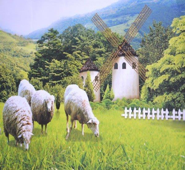 【San_Shang寢飾用品購物網】《溫感磨毛表布羊毛被》【雙人專用6X7尺】