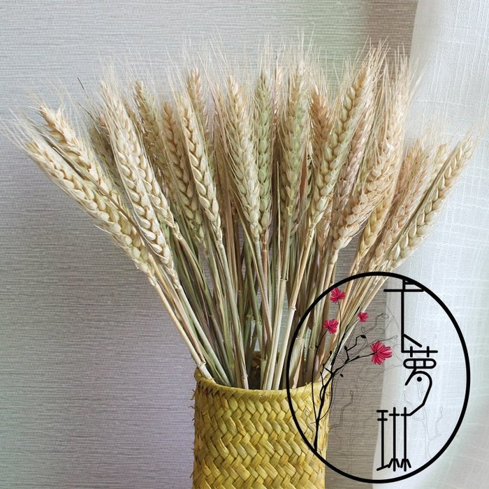 yoyo淘淘樂  干花材料天然小麥 麥子麥穗大麥 高粱穗風干植物原材料裝飾
