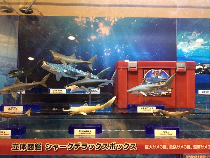 沖繩 海洋博公園 美麗海水族館 立體圖鑑 大白鯊 鯊魚系列 紀念 日本空運#629~小太陽日本精品