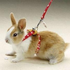 【🐱🐶培菓寵物48H出貨🐰🐹】MARUKAN》兔用外出牽繩 (4種顏色)  特價:280元