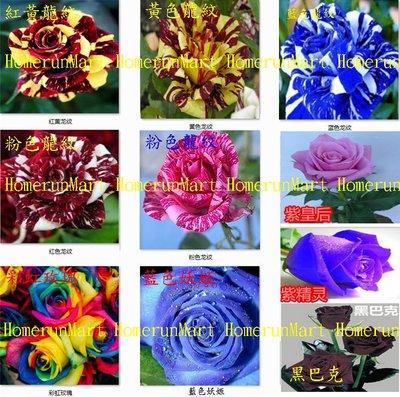 ZSP粉色龍紋玫瑰種子5粒法國玫瑰花種子 坦尼克粉佳人茱麗葉海洋之歌 路易十四冷美人藍色妖姬 黑巴克紫精靈彩虹玫瑰種子