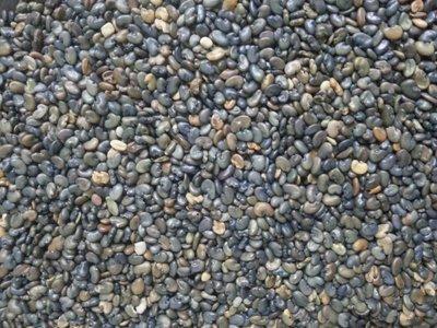 太陽麻種子  太陽麻 種子 綠肥 農作 休耕 一台斤30~32元
