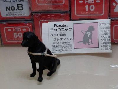 Furuta   動物 黑色導盲犬