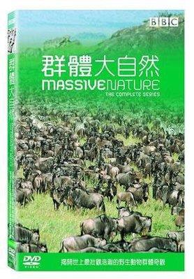 <<影音風暴>>(BBC)群體大自然  DVD  全180分鐘(下標即賣)